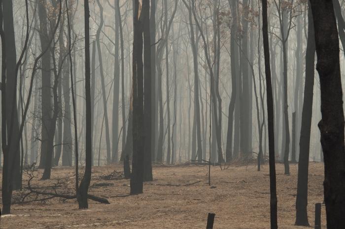 05 P1150513 Smoky Landscape, Sarsfield, Jan 15, '20.JPG